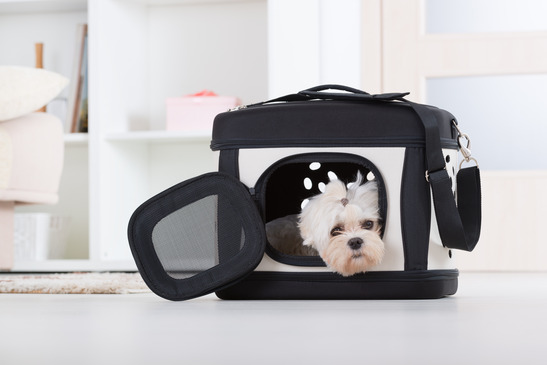 Dog sitting in his transporter