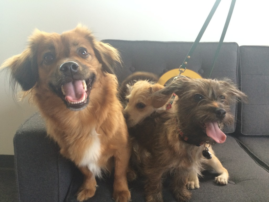 Dixie with Mila and Coco